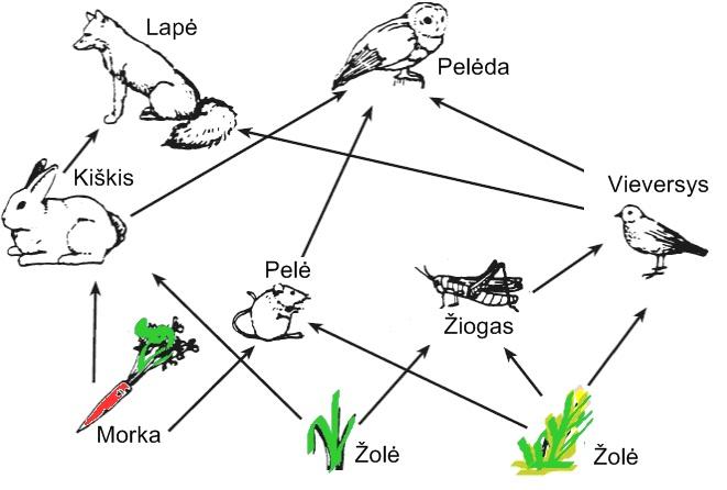 Augalėdžiai gyvūnai